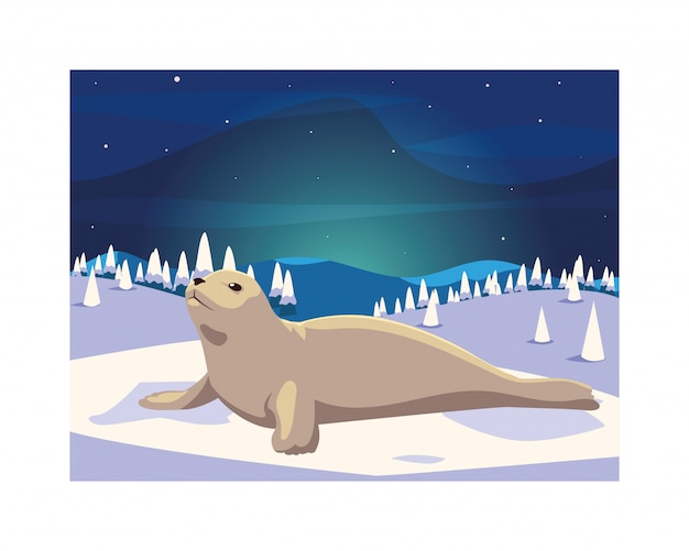 Seal at the north pole