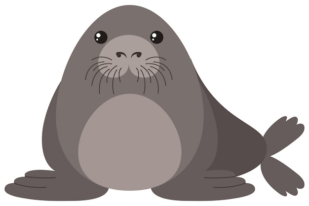 Seal with round body