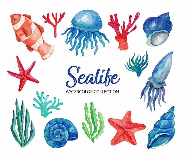 Sealife watercolor elements