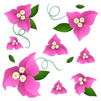 ピンクのブーゲンビリアの花とシームレスな背景デザイン