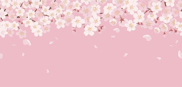 Бесшовные цветочные с вишневыми цветами в полном цвету на розовом.