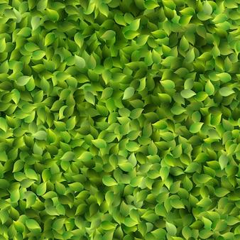 Бесшовные зеленые листья шаблон весной или летом свежий фон.