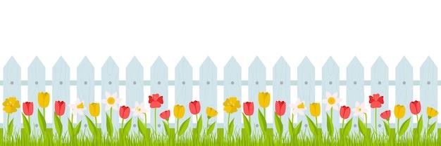 シームレスな水平方向の境界線。赤、黄色のチューリップと水仙と柵のある芝生。夏、白い背景の上のフラットなスタイルの漫画スタイルの春のイラスト。