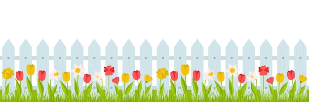 Seamless horizontal border. lawn grass with red, yellow tulips and daffodils and a fence. summer, spring illustration in cartoon style in a flat style on a white background.