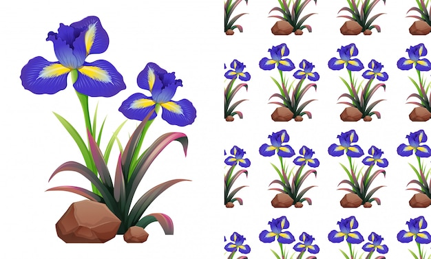 Seamless iris flowers on rocks