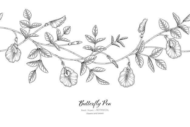 Seamless pattern butterfly peas flower and leaf hand drawn botanical illustration with line art.