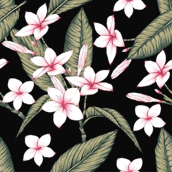 Seamless pattern frangipani flowers on black bacground.