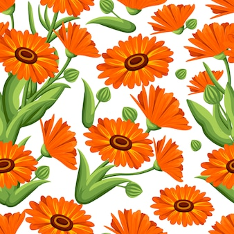 Seamless pattern.  illustration calendula flowers on white background. medicinal herbs