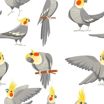 흰색 바탕에 일반 회색 앵무새(nymphicus hollandicus, corella) 만화 새 디자인 플랫 벡터 삽화의 성인 앵무새의 원활한 패턴입니다.
