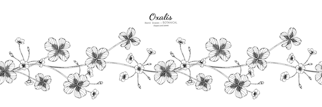 Seamless pattern oxalis flower and leaf hand drawn botanical illustration with line art.