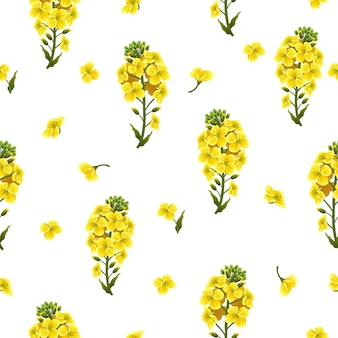 Seamless pattern rape flowers and leaves, canola.