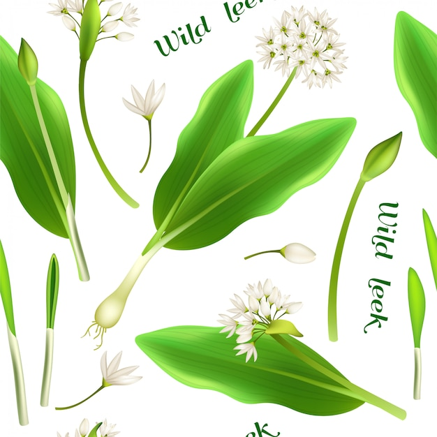 Seamless pattern wild leek and garlic.