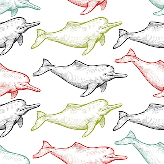 Seamless pattern with animal river dolphin.