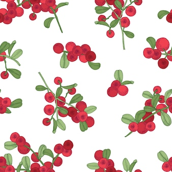 Seamless pattern with arctic lingonberry on white background