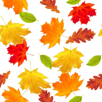 Seamless pattern with autumn maple and oak leaves for autumn greeting card gift paper fills