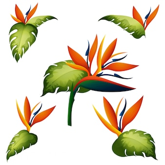 Seamless pattern with bird of paradise