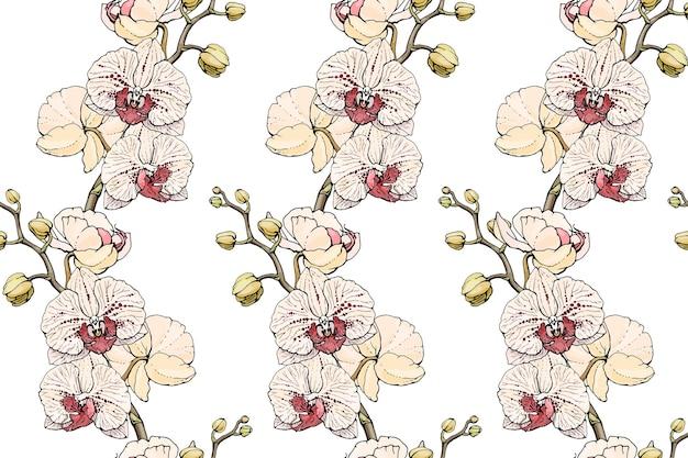 Бесшовный фон с орхидеями falenopsis. бесконечная текстура для вашего дизайна.
