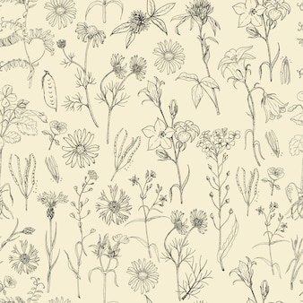 Seamless pattern with field flowers and herbs