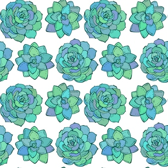 Seamless pattern with hand drawn color succulent plants on white background
