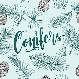 Seamless pattern with image of a coniferous branches and pine cone on a white background winter