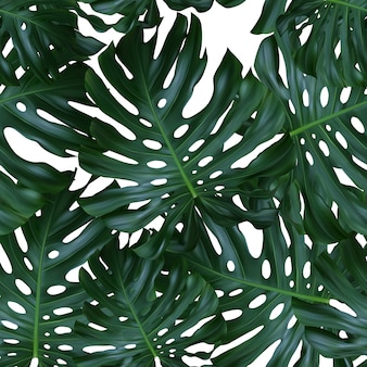 Seamless pattern with leaves of monstera deliciosa plant