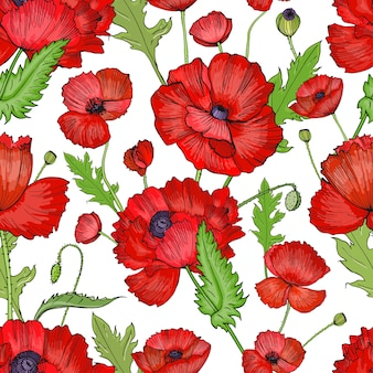 Seamless pattern with poppies. colorful hand drawn background.