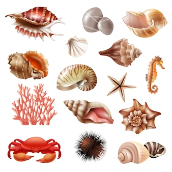 Seashell realistic set
