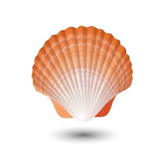 貝殻。の海のシェル。貝殻のロゴ。貝殻が分離されました。