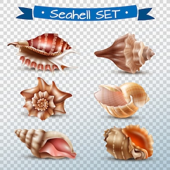 Seashell transparent set