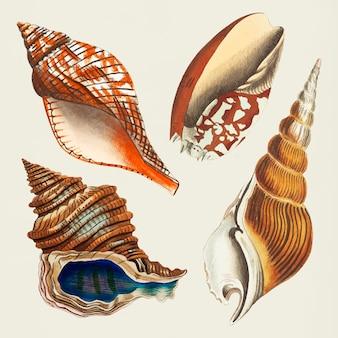 貝殻ヴィンテージクリップアートコレクション