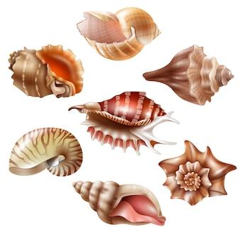 Реалистичный набор seashell