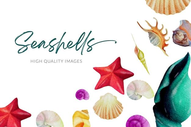 貝殻の水彩イラスト