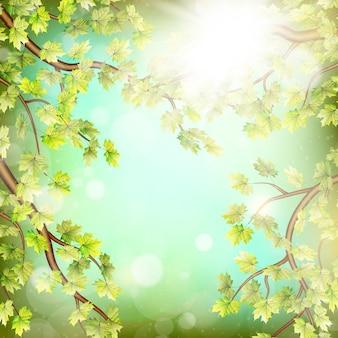 新鮮な緑の葉で季節の枝。