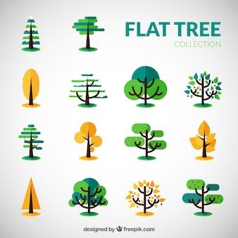 Seasonal tree collection