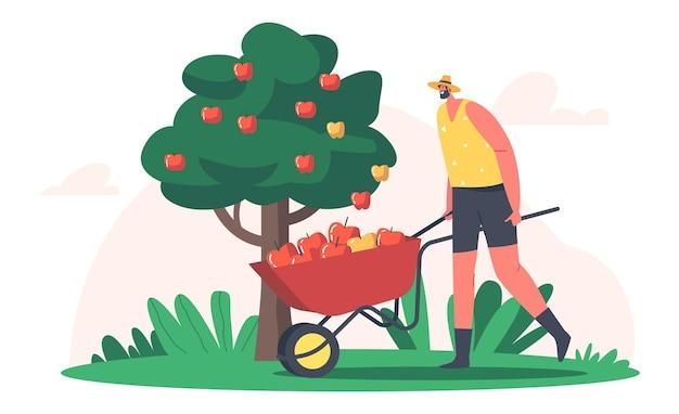농장의 계절 작업. man farmer는 과수원에서 수레에 사과 수확을 선택합니다. 잘 익은 과일을 수확하는 정원사 캐릭터