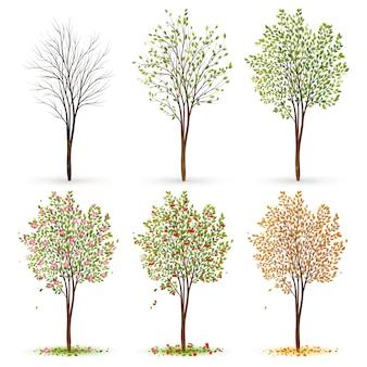 Seasons of tree
