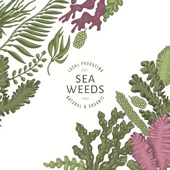 Seaweed color  template. hand drawn  seaweeds illustration. engraved style sea food . retro sea plants background