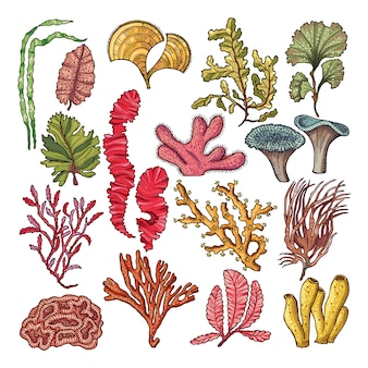 Seaweed and corals.