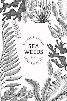 해초 디자인 템플릿입니다. 손으로 그린 해초 그림입니다. 새겨진 스타일의 해산물. 레트로 바다 식물