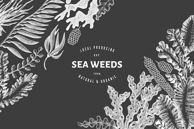 해초 디자인 템플릿입니다. 분필 보드에 손으로 그린 해초 그림입니다. 레트로 스타일의 해산물