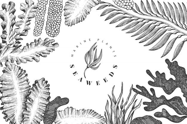 해초 디자인 템플릿입니다. 손으로 그린 벡터 해초 그림. 새겨진 스타일의 바다 음식 배너. 레트로 바다 식물 배경
