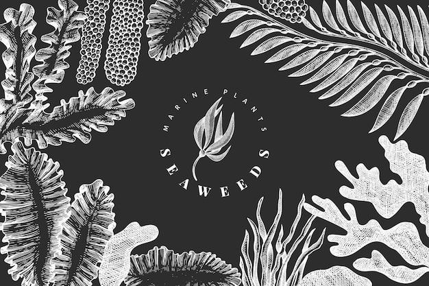 해초 디자인 템플릿입니다. 분필 보드에 손으로 그린 벡터 해 초 그림. 새겨진 스타일의 바다 음식 배너. 빈티지 바다 식물 배경