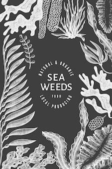 해초 디자인 템플릿입니다. 분필 보드에 손으로 그린 벡터 해초 그림입니다. 새겨진된 스타일 바다 음식 배너입니다. 빈티지 바다 식물 배경