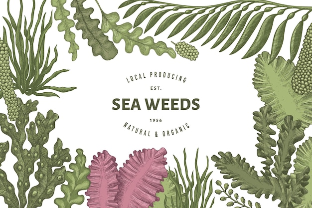 Seaweed  template. hand drawn  seaweeds illustration. engraved style sea food banner. retro sea plants background