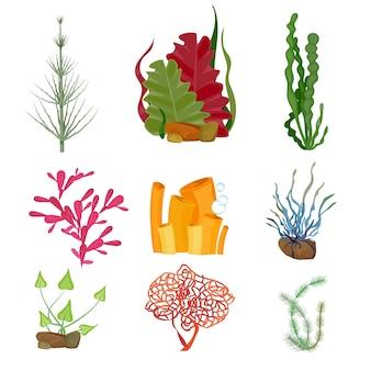 海藻。水中の海や海の植物の海洋植物の野生生物の漫画セット。