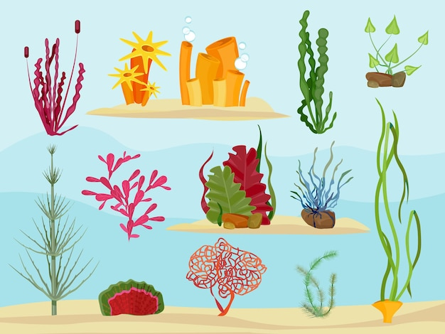 수중 해초. 바다 또는 바다 장식 컬렉션의 야생 동물 해양 식물 식물.