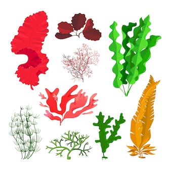 Seaweeds and coral reef underwater collection isolated on white.