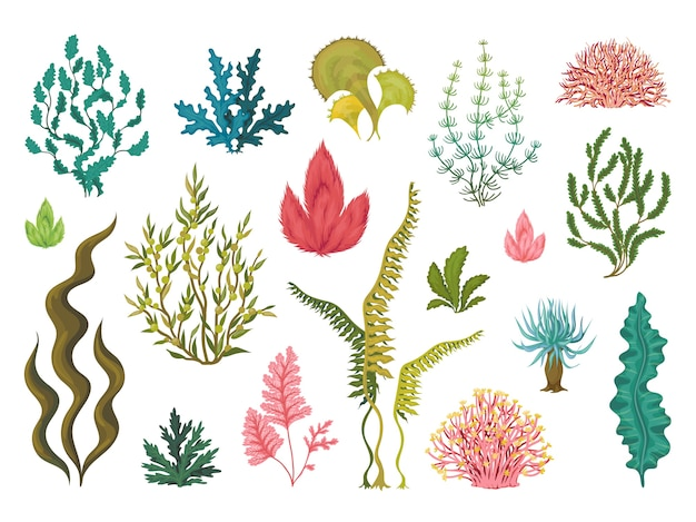 海藻。水中の海の植物、海のサンゴの要素、手描きの海の繁栄藻、漫画の装飾的な図面。