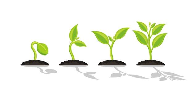 묘목 원예 식물