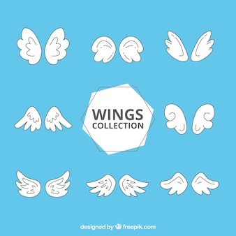Selection of eight fantastic wings
